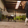 En bra kennel tillgodoser hundarnas behov