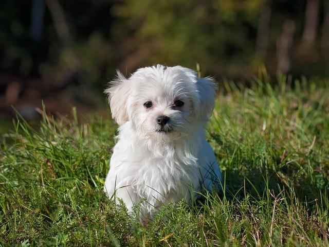 En hund i gräs